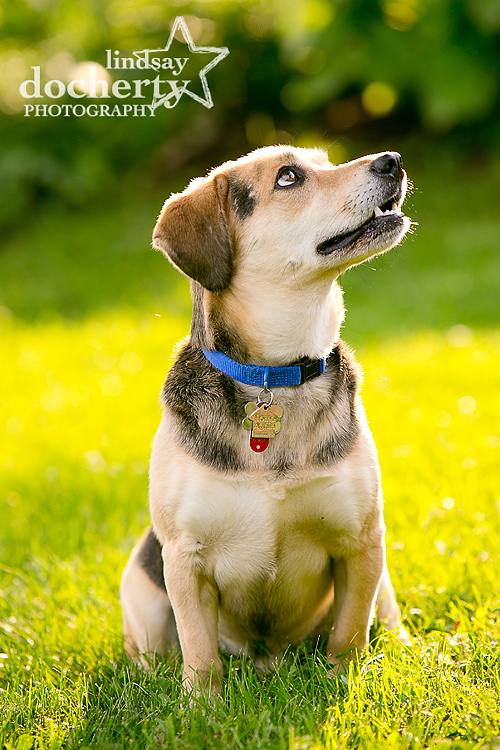 Pet photography session in Norristown, PA