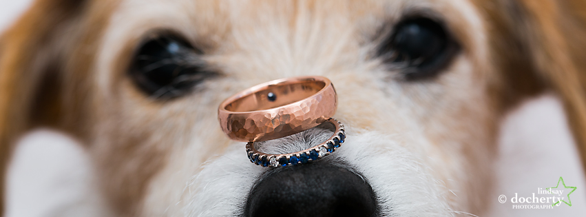 macro dog with wedding rings on nose