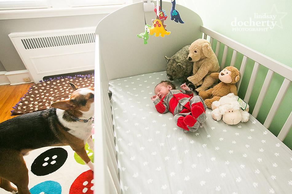 hound dog looking into crib with newborn baby boy