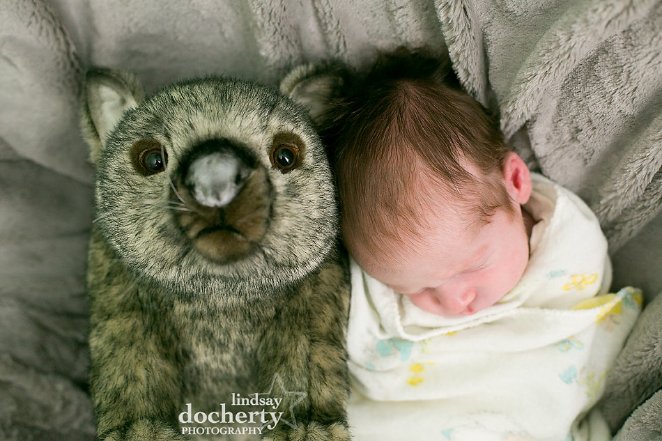 newborn baby with wombat stuffed animal