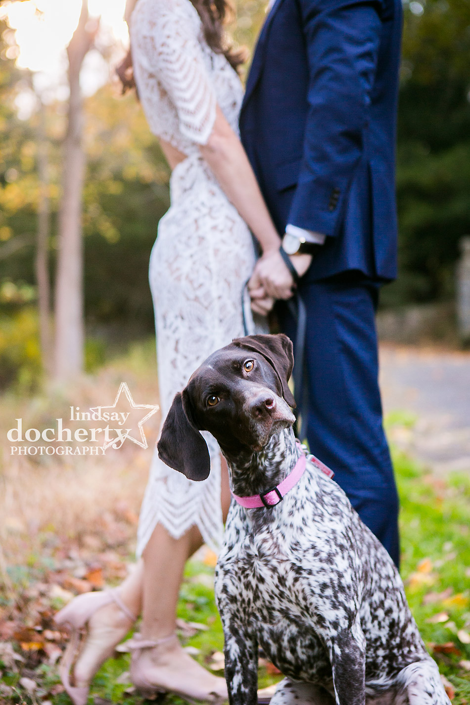 German Shorthair Pointer dog in engagement picture at Ridley Creek State Park