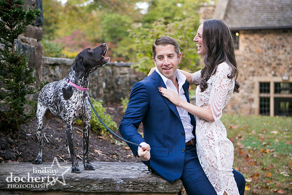 Funny German Shorthair Pointer dog barking at couple at photo session