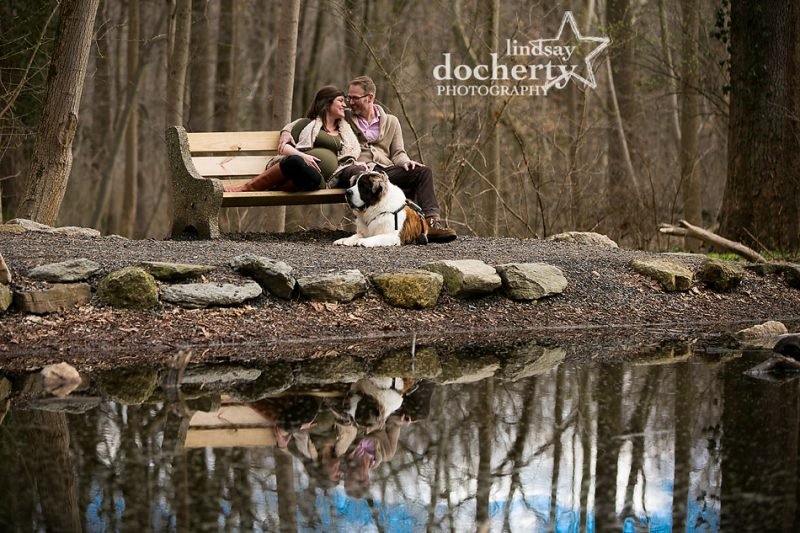 maternity session in Wissahickon Park with St. Bernard