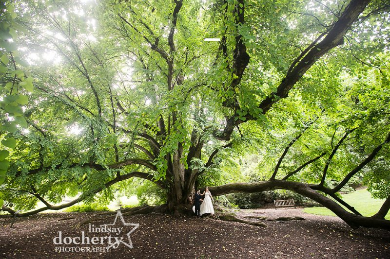 bride and groom at Morris Arboretum under huge tree