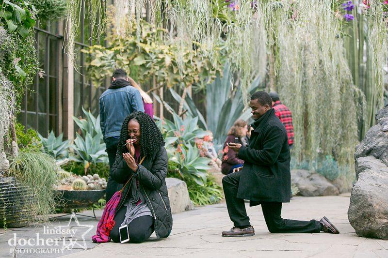 surprise proposal in Longwood Gardens Silver Garden