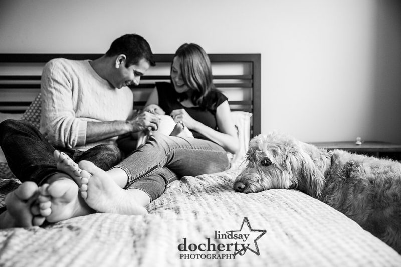 scruffy dog left out of family pictures with newborn baby girl