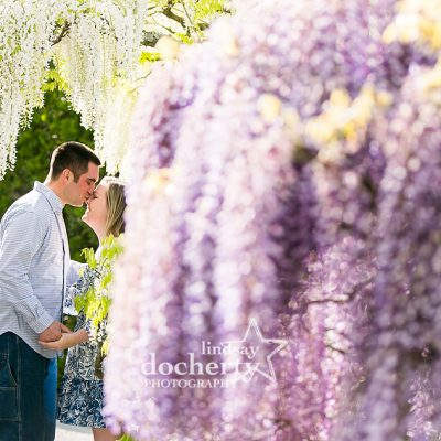 spring engagement session among purple and white wisteria at Longwood Gardens